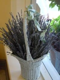 Lavender-Bouquetnew